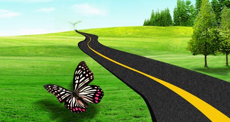 الطريق الناجح